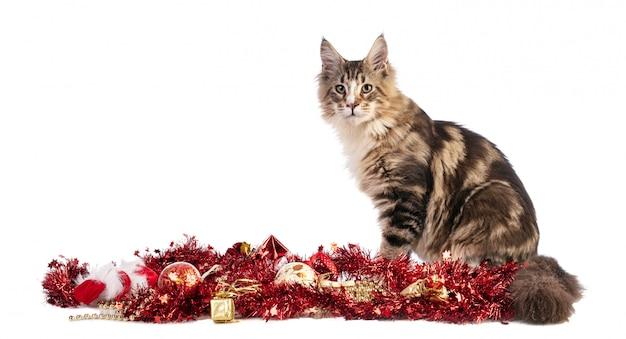 Junge maine coont weihnachten mit girlanden
