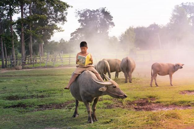 Junge mit büffel in der landschaft von thailand. jungen, die büffel reiten und ein buch für bildung lesen.