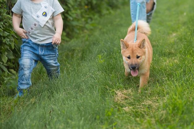 Junge mutter und kleiner kinderjunge spielen mit einem hund auf dem gras. welpe shiba inu spielt mit einer glücklichen familie