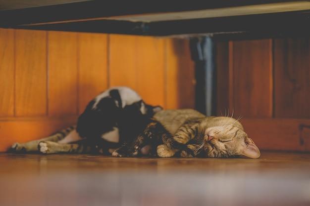 Junge mutterkatze schläft und stillende kätzchen auf holzboden im haus.