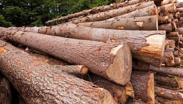 Junge, nicht große bäume fällen und stapeln