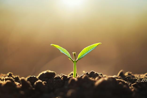 Junge pflanze, die auf schmutz mit sonnenschein in der natur wächst. öko-earthday-konzept