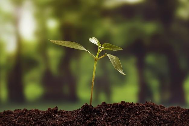 Junge pflanze, die aus dem boden vor unscharfem waldhintergrund wächst