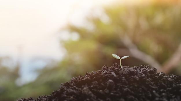 Junge pflanze, die im sonnenlichthintergrund wächst, pflanzensämling