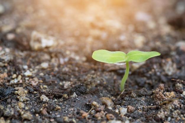 Junge pflanze im schössling des baumes und ein tropfen wasser und das morgenlicht.