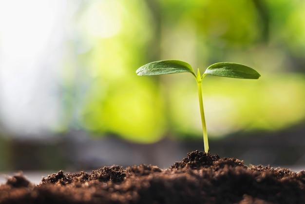 Junge pflanze wächst mit sonnenschein in der natur