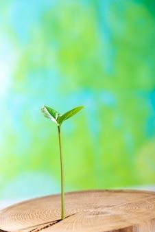Junge pflanze wächst von innen alter baum auf grün