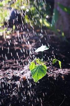 Junge pflanzen aus einer gießkanne bewässert