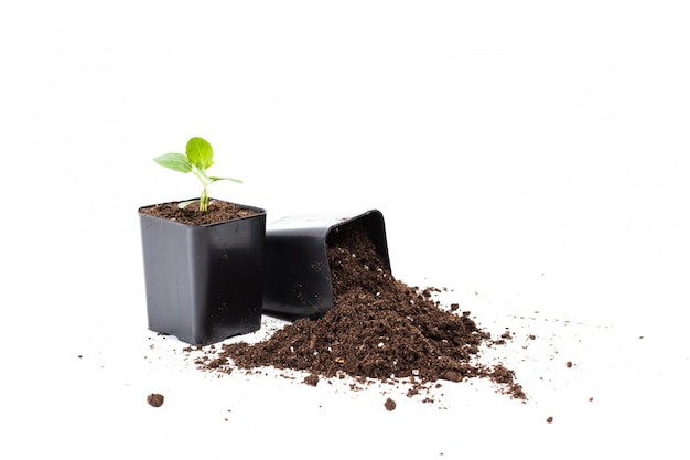 Junge pflanzen mit schmutz auf schwarzen töpfen