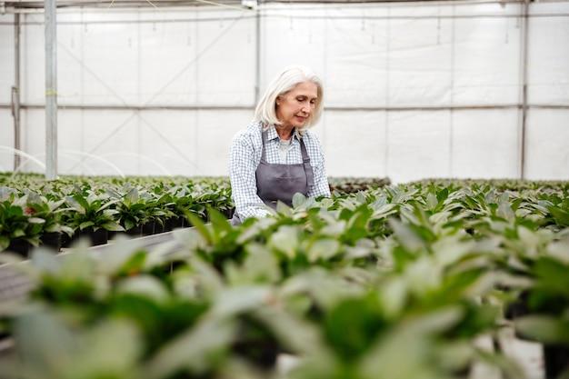 Junge reife frau, die mit pflanzen im gewächshaus arbeitet