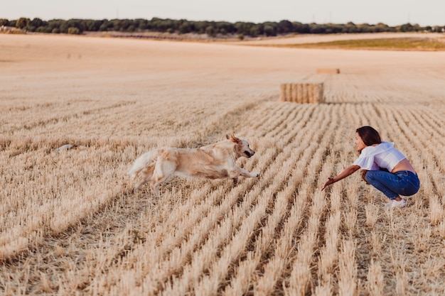 Junge schöne frau, die mit ihrem hund des goldenen apportierhunds auf einem gelben feld am sonnenuntergang geht. lustiger hund, der zu ihrem inhaber läuft