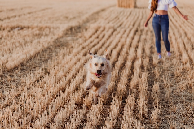 Junge schöne frau, die mit ihrem hund des goldenen apportierhunds auf einem gelben feld am sonnenuntergang geht. lustiger hund, der zur kamera läuft.