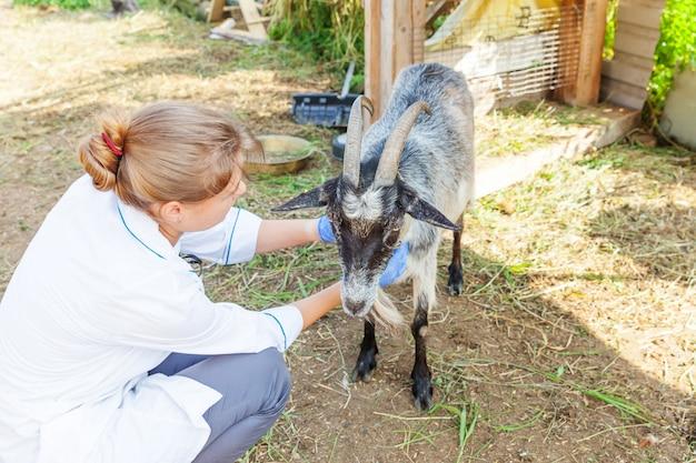 Junge tierarztfrau mit stethoskop, das ziege auf ranch hält und untersucht