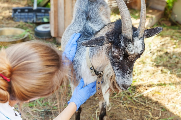 Junge tierarztfrau mit stethoskop, das ziege auf ranchhintergrund hält und untersucht