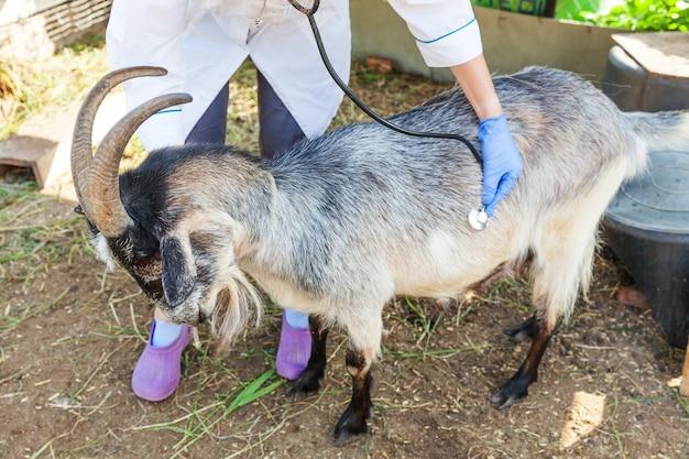 Junge tierarztfrau mit stethoskop, das ziege auf ranchhintergrund hält und untersucht.