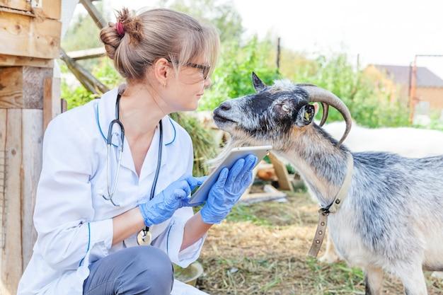 Junge tierarztfrau mit tablet-computer, die ziege auf ranchhintergrund untersucht. tierarzt untersucht ziege im natürlichen öko-bauernhof. tierpflege und ökologisches viehzuchtkonzept.