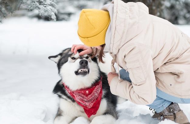Junge verärgerte alaskische malamute mit kaukasischer frau im schnee. hundeangriffe. winter.