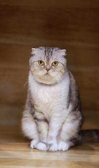 Junge verrückte überraschte katze machen große augennahaufnahme.