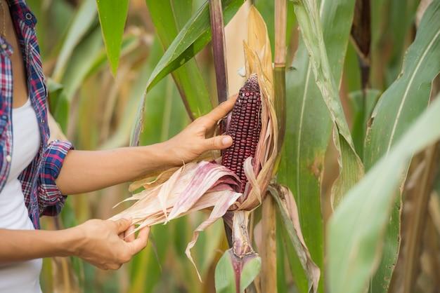 Junge weibliche landwirtin, die auf dem feld arbeitet und pflanzen überprüft