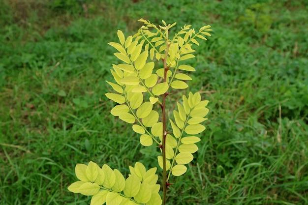 Junge wilde pflanzen mit dornen, die im feld wachsen