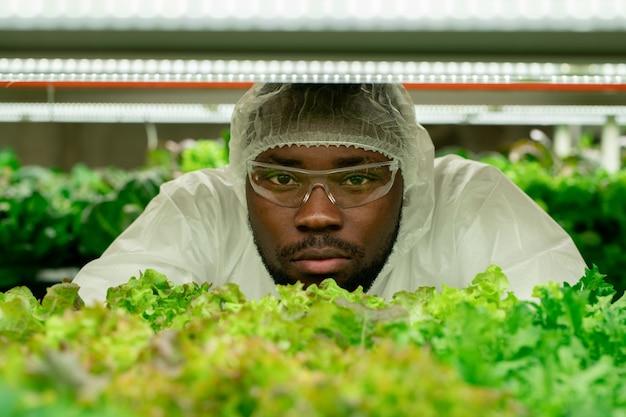 Junger afrikanischer männlicher agraringenieur in schutzbrillen und overalls, der sie ansieht, während er am regal mit setzlingen von grünem salat steht