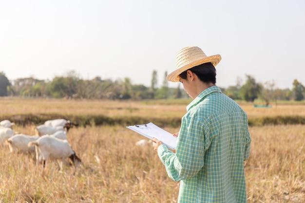 Junger asiatischer kluger bauernmann, der zwischenablage-checkliste mit unscharfen ziegen hält, die gras im feld essen, kluges bauernkonzept