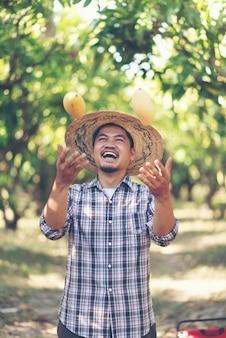 Junger asiatischer landwirt, der mangofrucht im biohof auswählt
