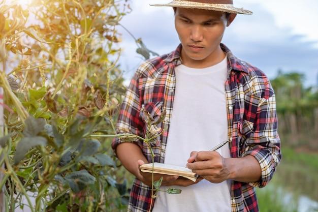 Junger asiatischer landwirt, der seine anlage oder gemüse überprüft