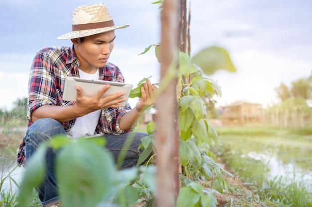 Junger asiatischer landwirt, der tablette verwendet und seine anlage oder gemüse überprüft