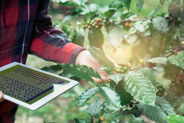 Junger asiatischer moderner landwirt, der digitale tablette verwendet und kaffeebohnen an der kaffeefeldplantage überprüft. anwendung der modernen technologie im landwirtschaftlichen wachsenden tätigkeitskonzept