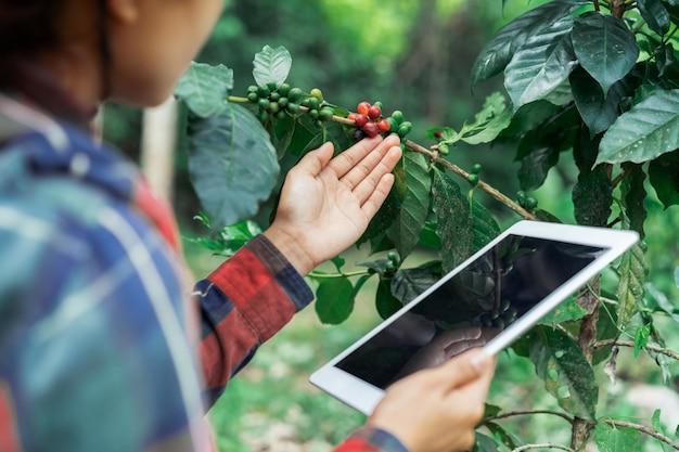 Junger asiatischer moderner landwirt, der digitale tablette verwendet und reife kaffeebohnen an der kaffeefeldplantage überprüft. anwendung der modernen technologie im landwirtschaftlichen wachsenden tätigkeitskonzept