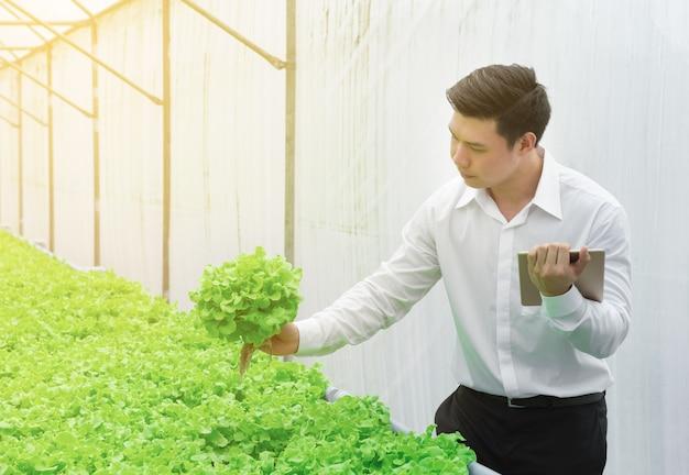 Junger asiatischer wissenschaftler überprüfen die qualitätskontrolle des grünen gemüses