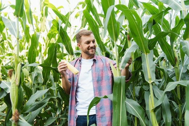 Junger attraktiver mann mit bart, der im spätsommer maiskolben auf dem feld überprüft