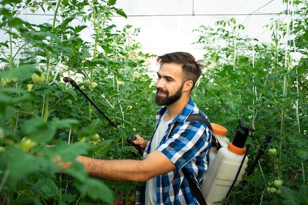 Junger bärtiger bauernarbeiter besprüht pflanzen mit pestiziden, um vor krankheit zu schützen