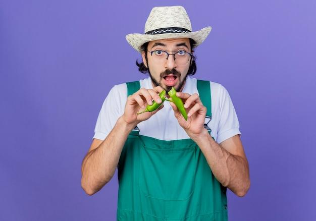 Junger bärtiger gärtnermann, der overall und hut trägt, der grünen heißen chilipfeffer zeigt, der ihn über blauer wand stehend bricht