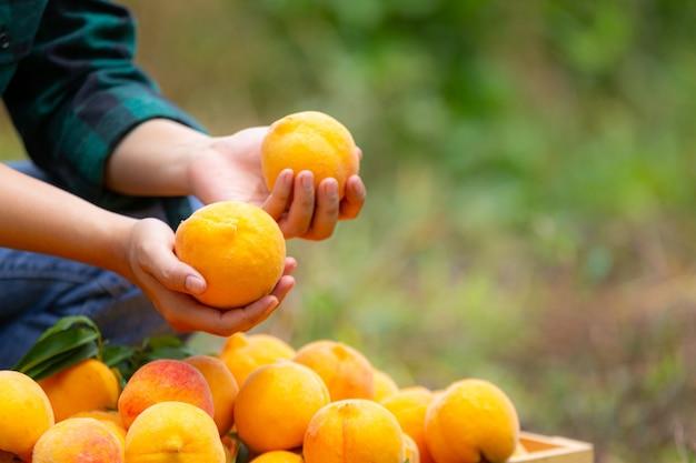 Junger bauer mit pfirsichen
