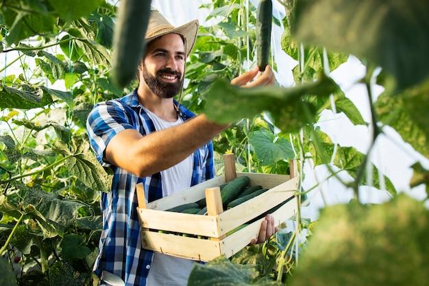 Junger bauernunternehmer mit hut, der frisches bio-gemüse anbaut und produziert