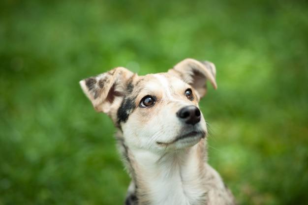 Junger brauner mischhund, der auf dem gras am riesigen garten liegt