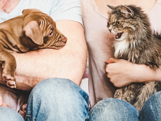 Junger, charmanter welpe und süße katze. nahansicht