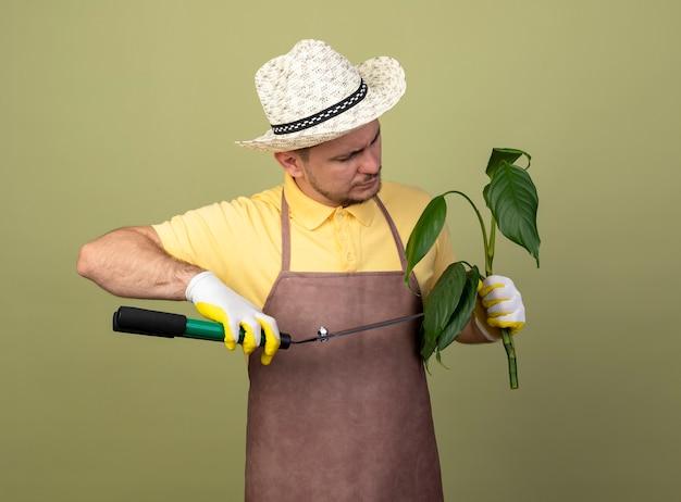 Junger gärtnermann, der overall und hut in arbeitshandschuhen hält, die pflanze halten, die es mit heckenscheren schneidet