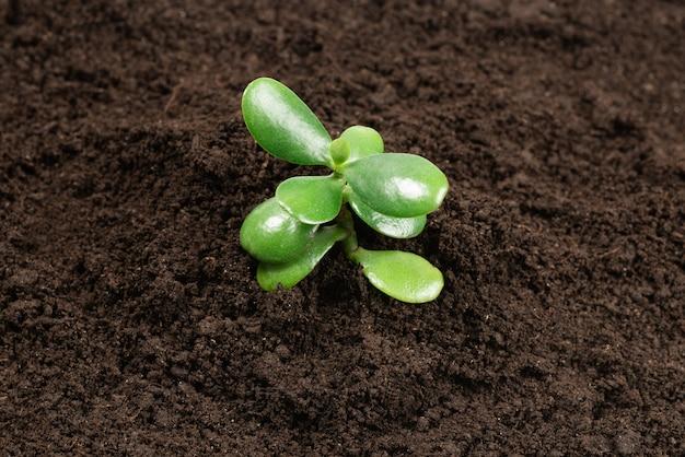 Junger grüner spross im boden.