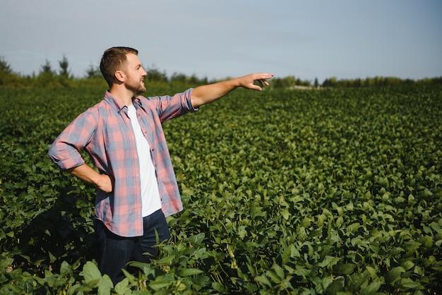 Junger gutaussehender agraringenieur auf sojabohnenfeld mit tablet in den händen im frühsommer