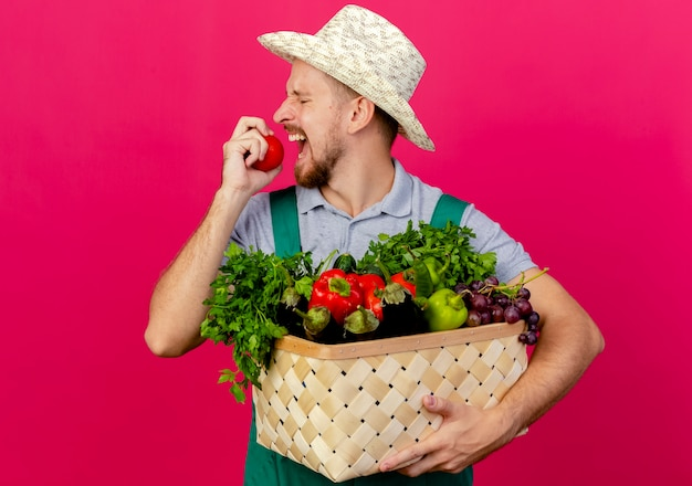 Junger hübscher slawischer gärtner in der uniform und im hut, der korb des gemüses hält, das bereit ist, tomate isoliert auf purpurroter wand zu beißen