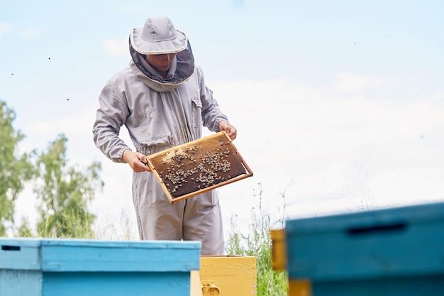 Junger imker, der bienenstockrahmen prüft