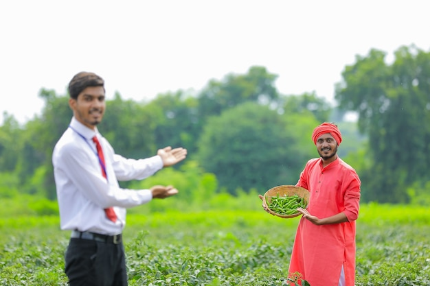 Junger indischer agronom, der mit landwirt am grünen chilipfefferfeld steht