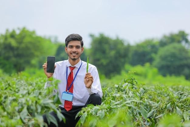 Junger indischer agronom, der smartphone am grünen chilipfefferfeld zeigt