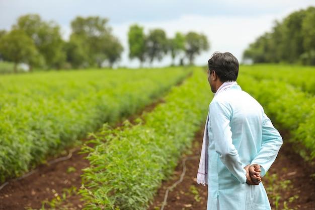 Junger indischer bauer, der im grünen taubenerbsenlandwirtschaftsfeld steht.