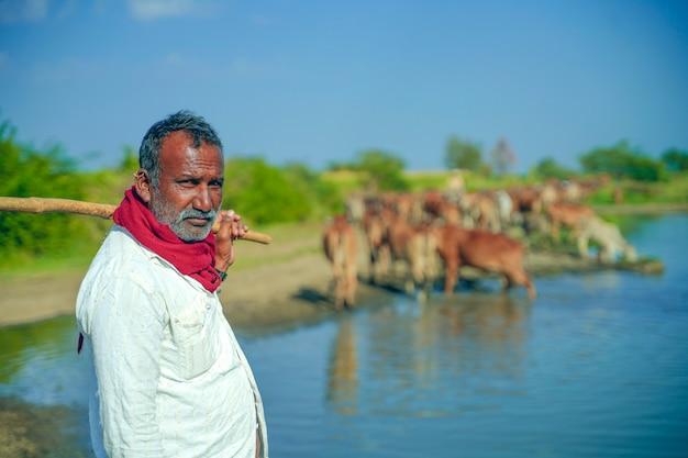 Junger indischer bauer mit seinem vieh