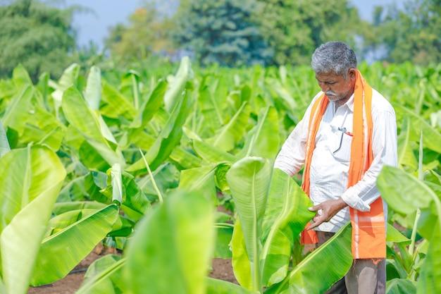 Junger indischer landwirt am feld