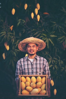 Junger intelligenter landwirt, moderner mangobauernhof